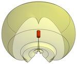 Wireless Antenna radiation pattern 3d model front